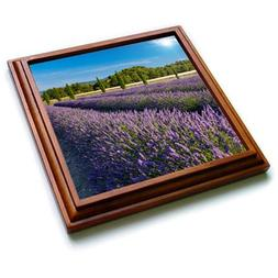 3dRose Danita Delimont - France - Rows of lavender, Provence
