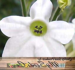 WHITE FRAGRANT NICOTIANA Flower Seeds - FLOWERING - Nicotian